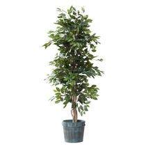 Groene bomen en planten